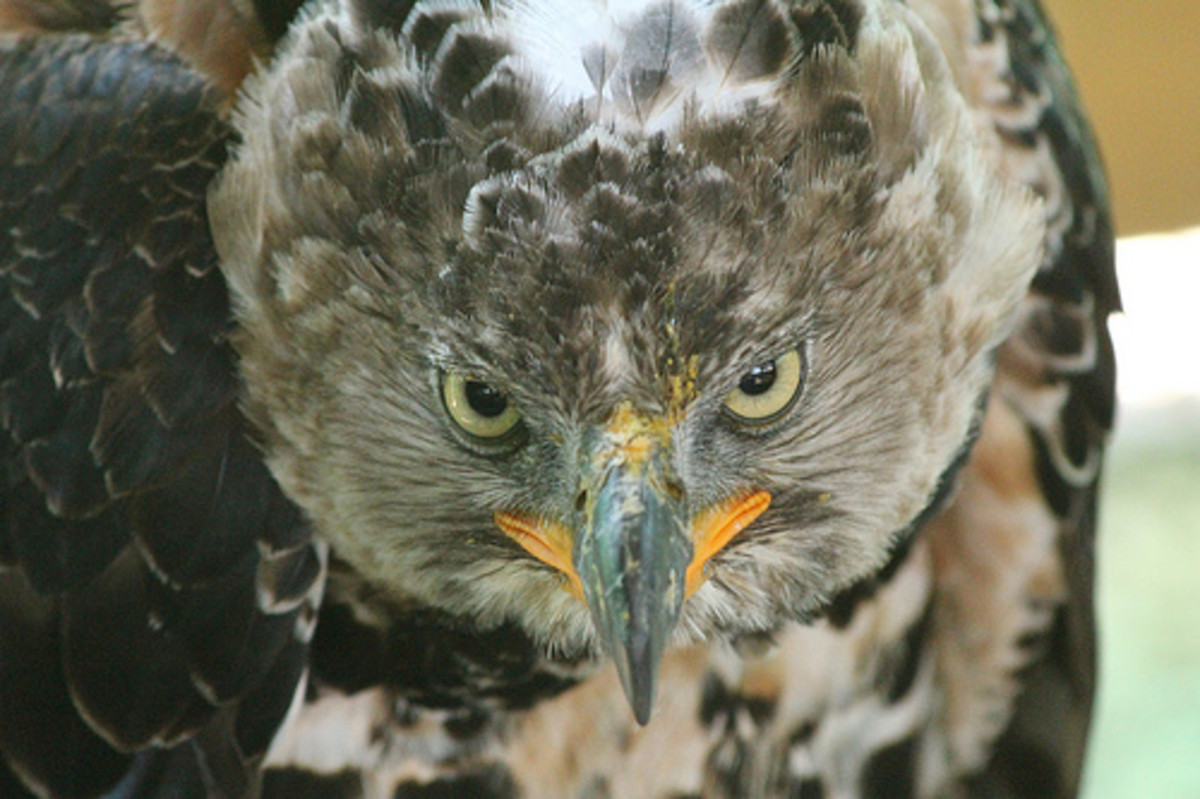 This is one mean looking bird!