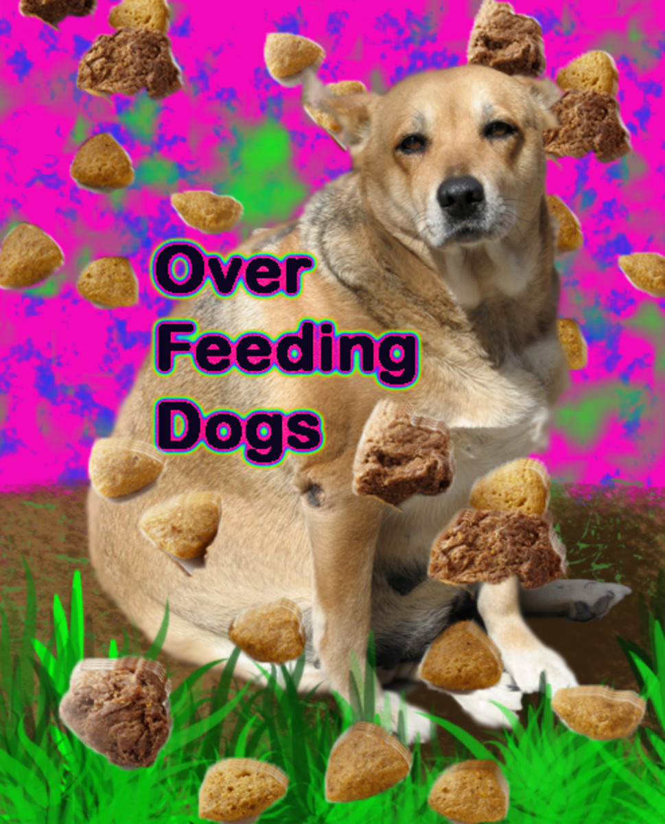 Over Feeding Dogs- A Very Bad Idea!