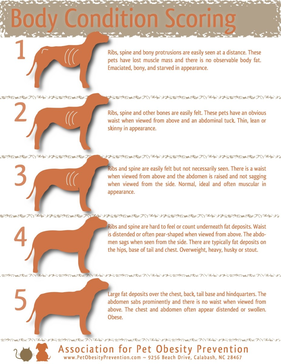 A wonderful guide to avoid over feeding a dog; this chart is well written and can help you to better understand how a healthy dog should appear.