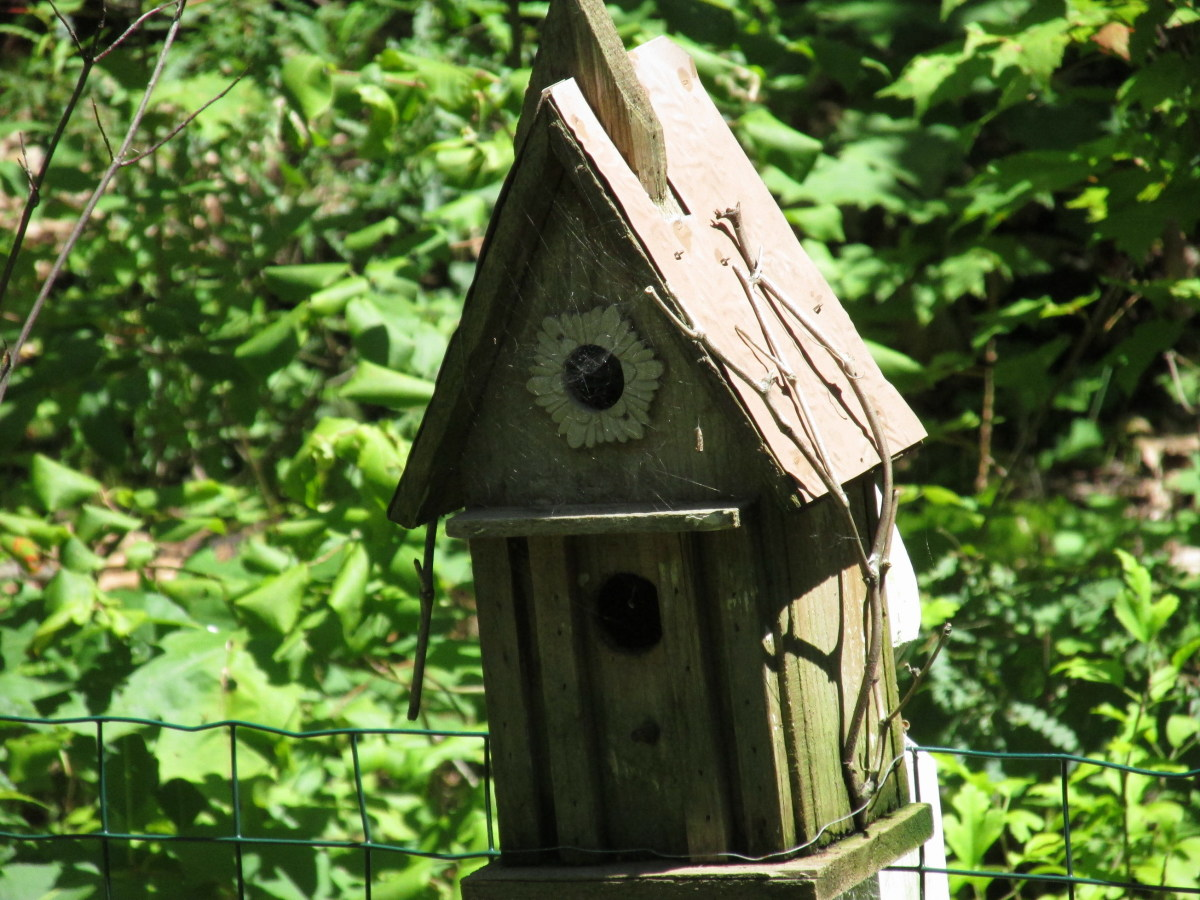 Bird House with spider web across entrance hole, indicating this structure is not being used right now.