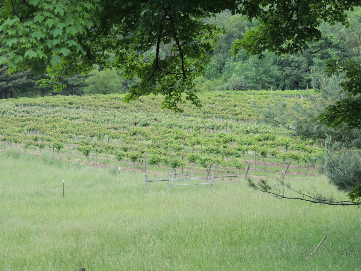ohio-wines-winery-at-wolf-creek