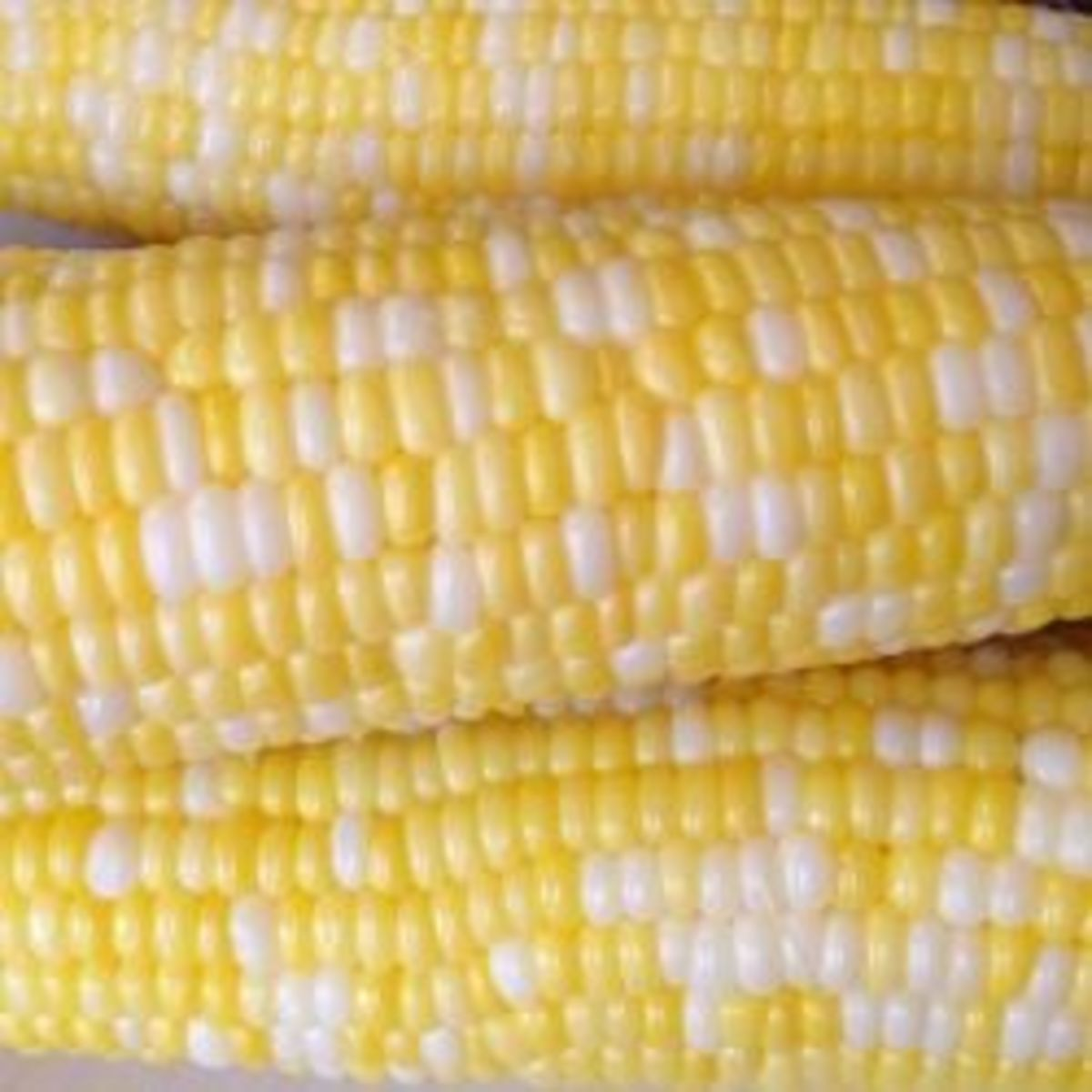 Olathe Sweet Corn