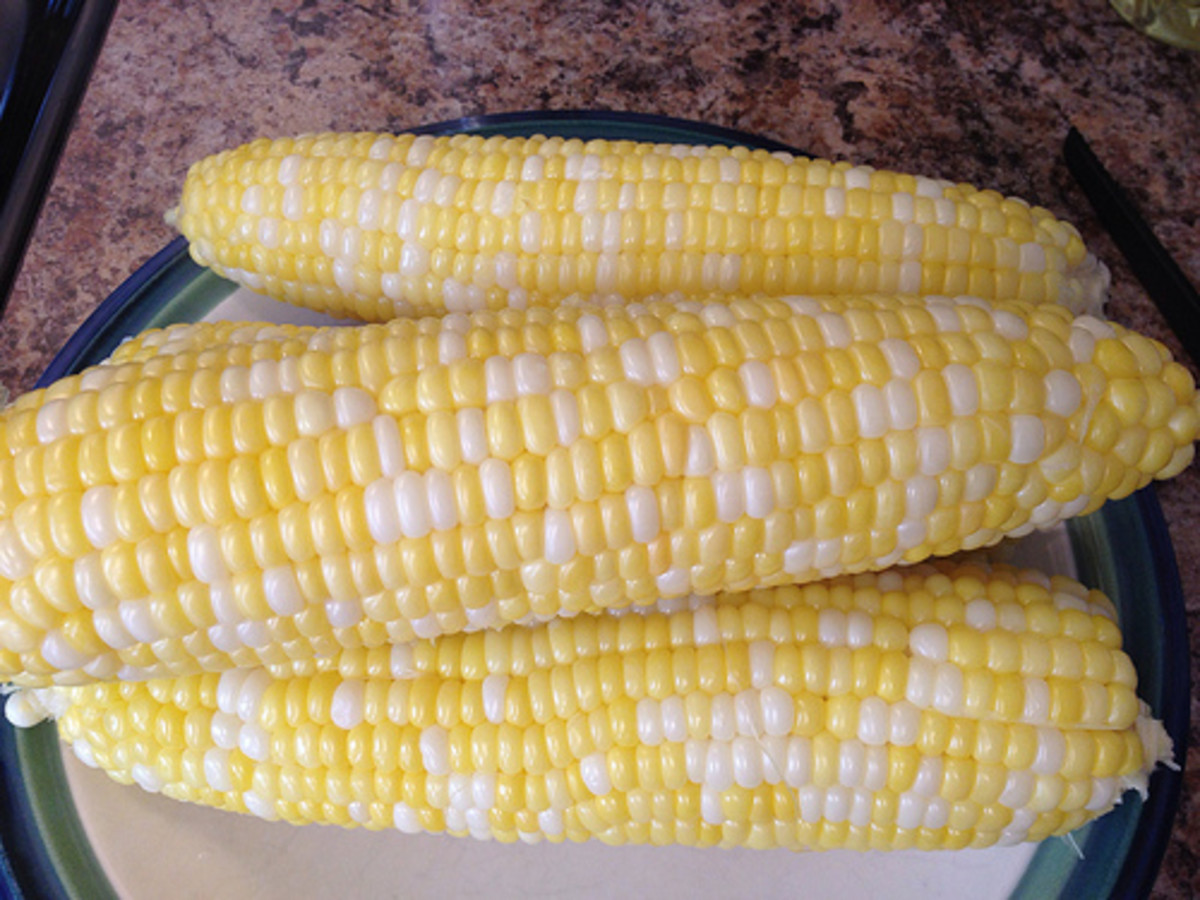 Cooked corn, steaming hot!
