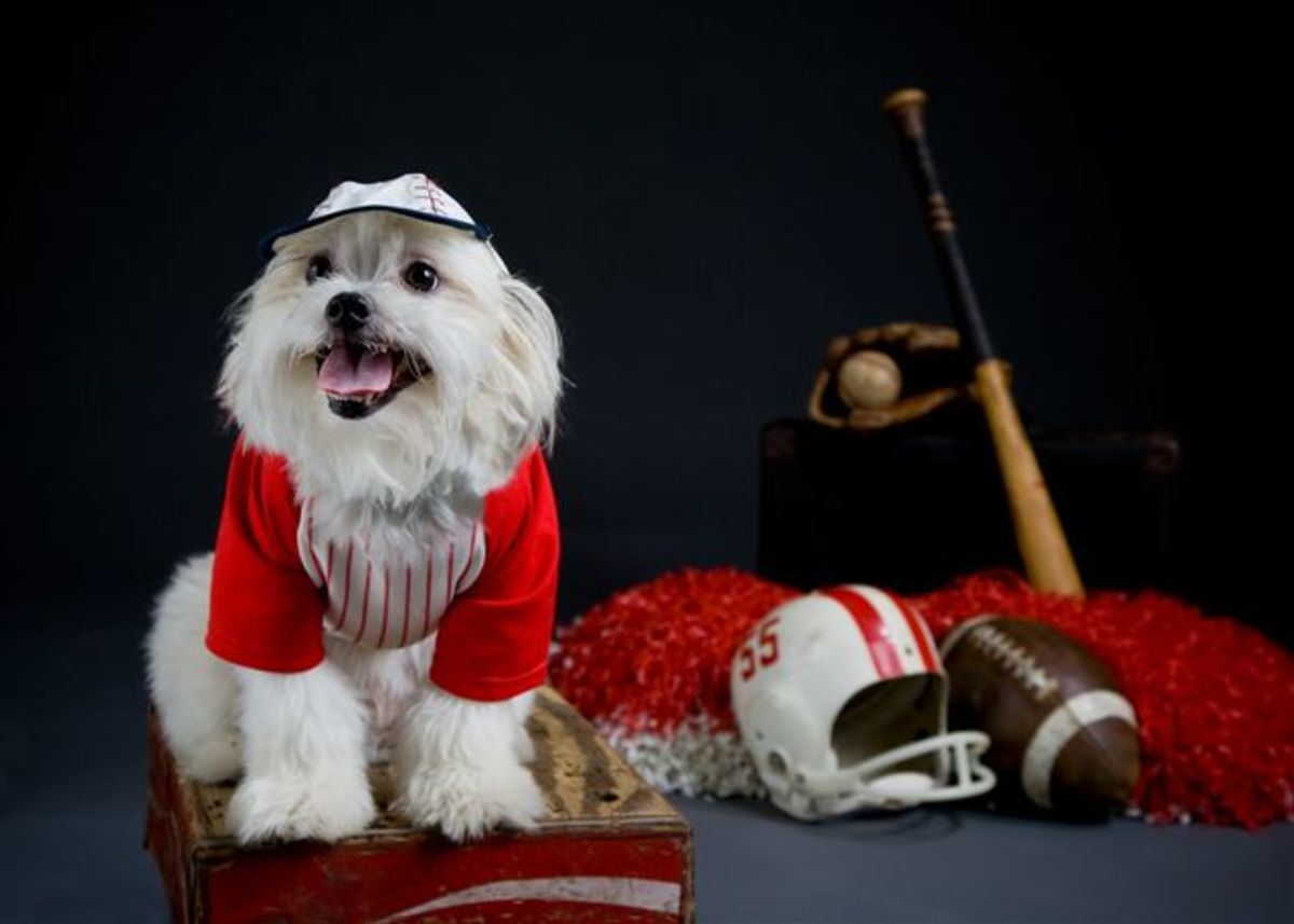 Gizmo posing in his baseball uniform