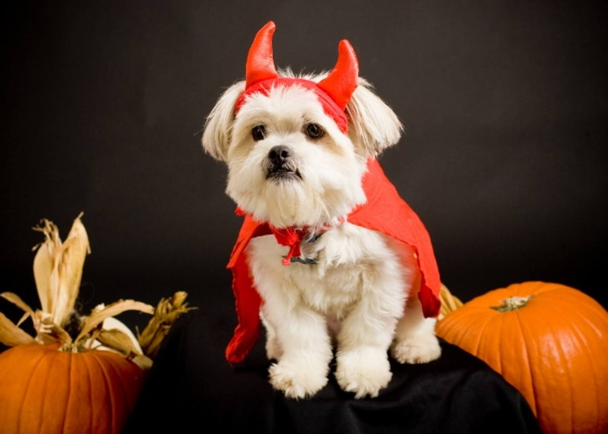 Ideas for Matching Halloween Costumes with Your Dog