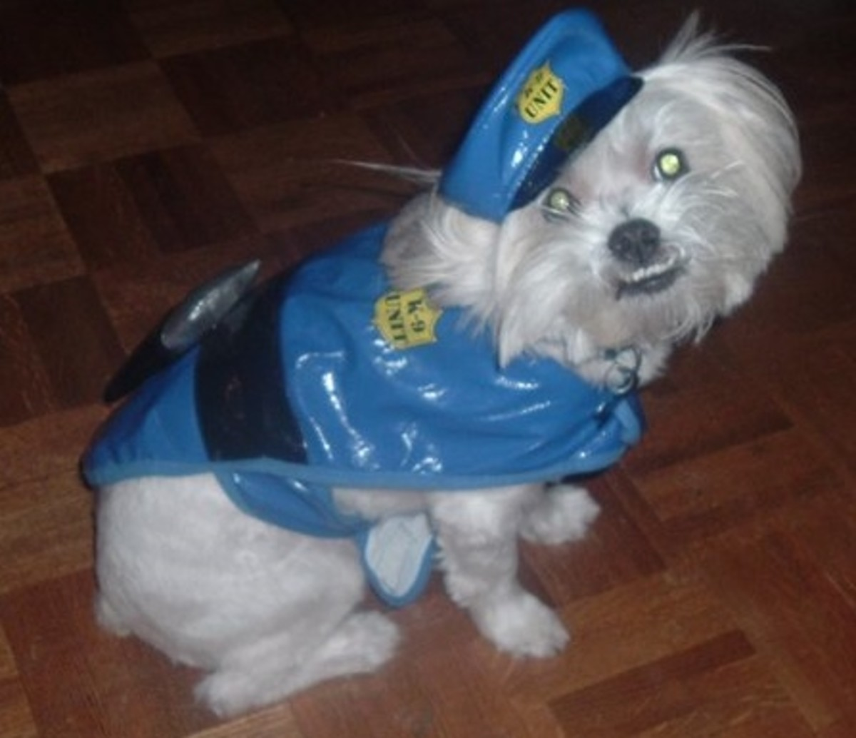 Gizmo as a policeman