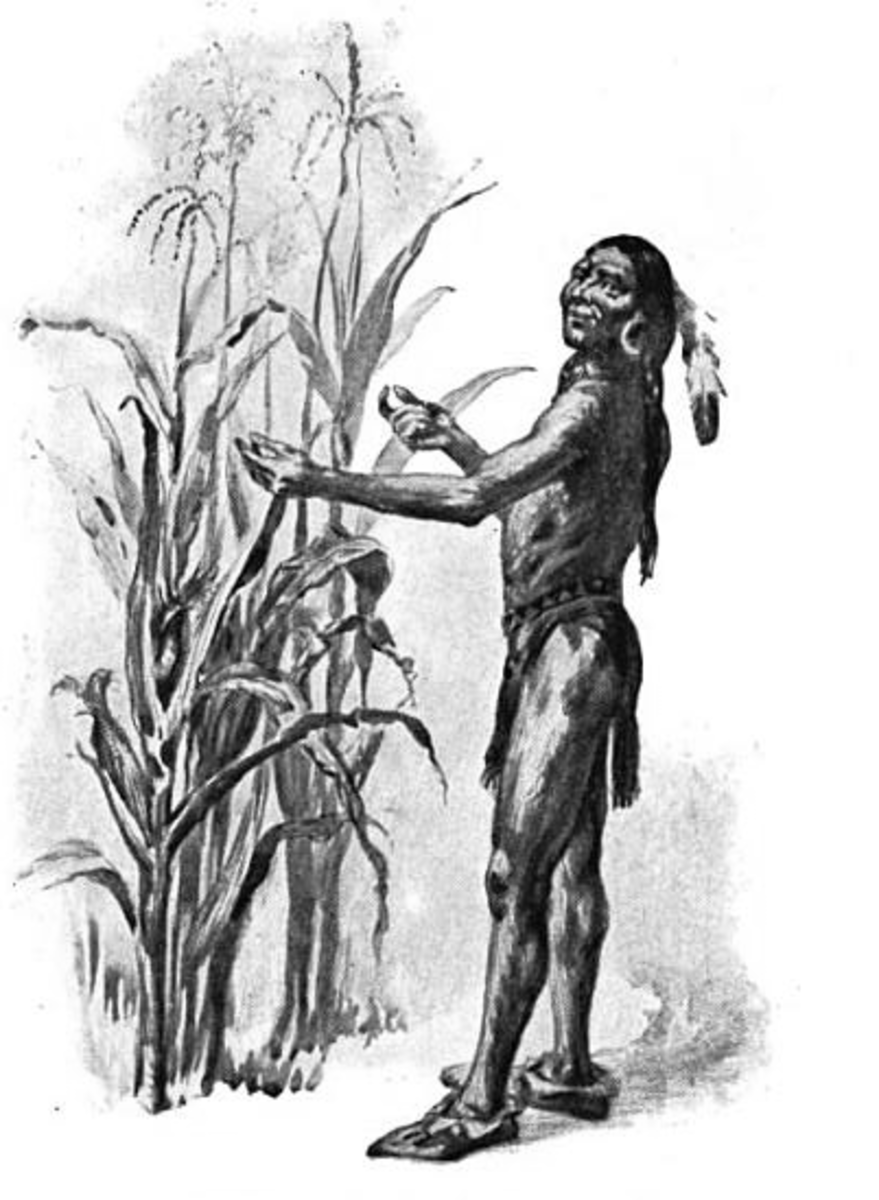Indian Chief Squanto Teaching Pilgrims How to Plant Corn Crops