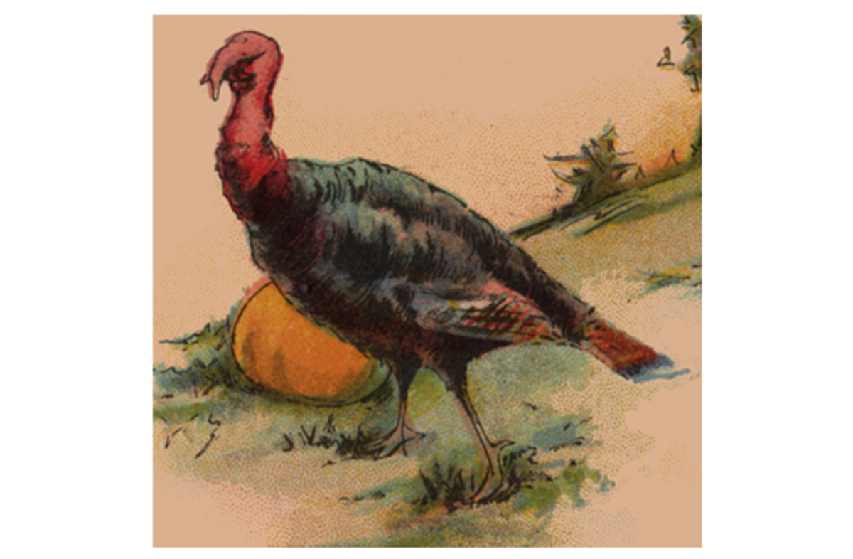 Wild Turkey and Pumpkin