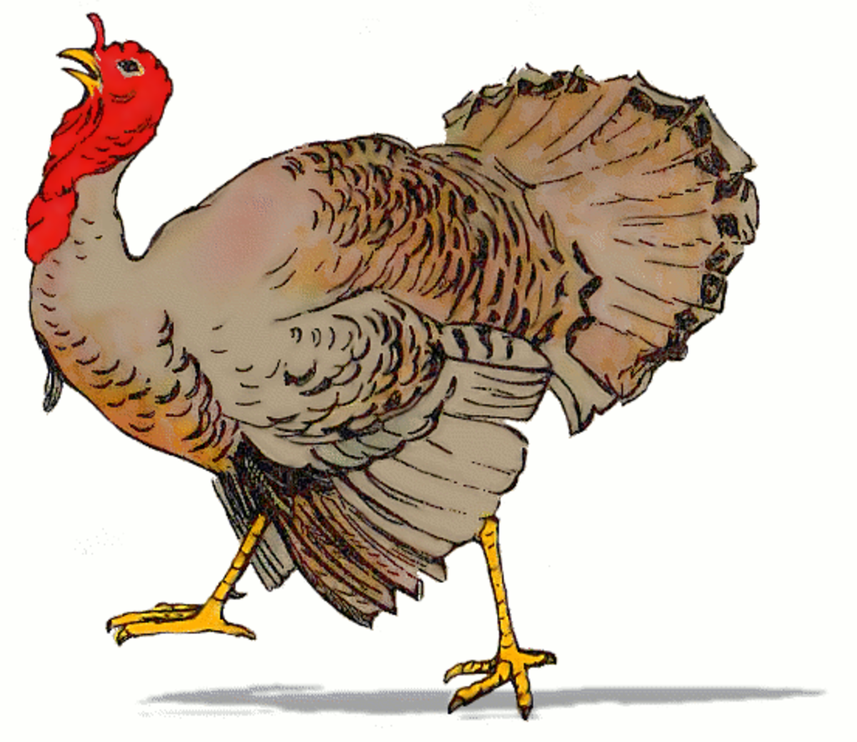 Turkey Gobbling