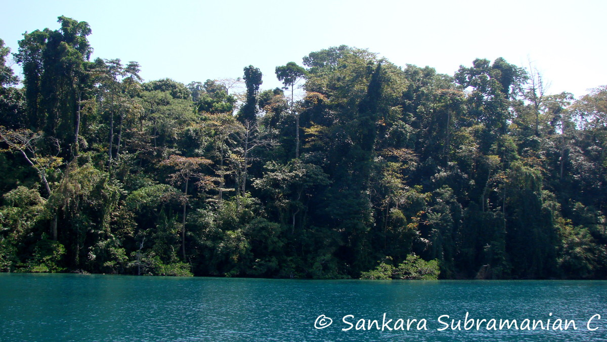 Over 80% of the territory of the Andaman and Nicobar islands is covered in dense rainforest and mangroves.