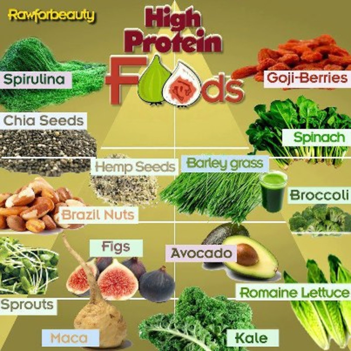 what-are-the-best-vegetable-protein-sources