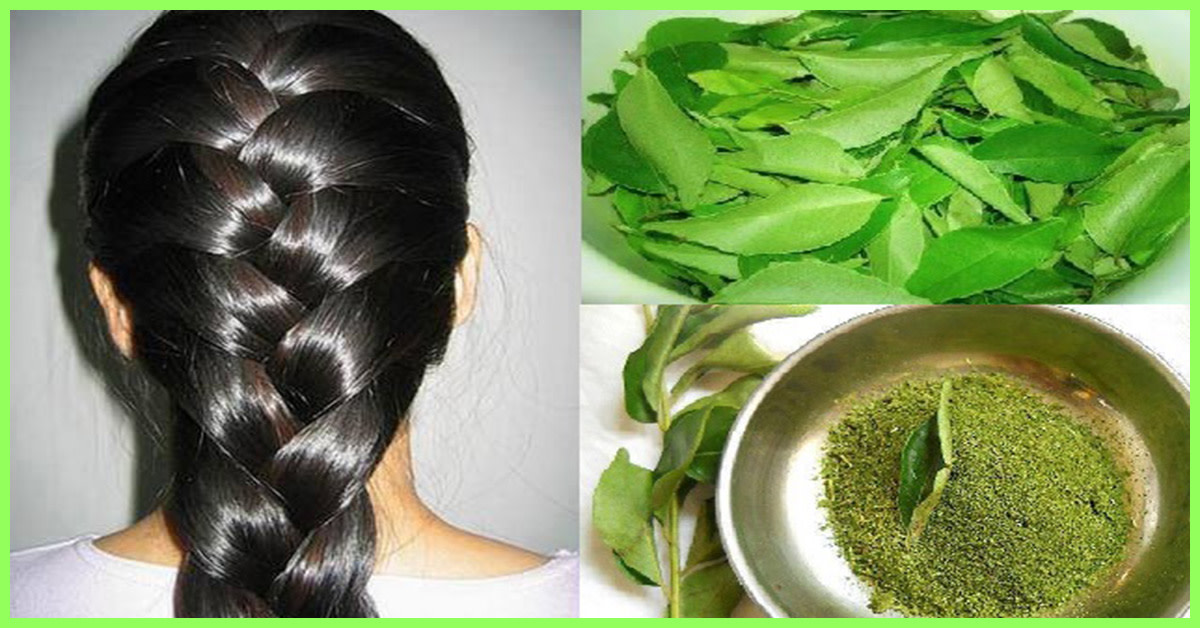 Curry Leaves mixed with coconut oil hair mask.
