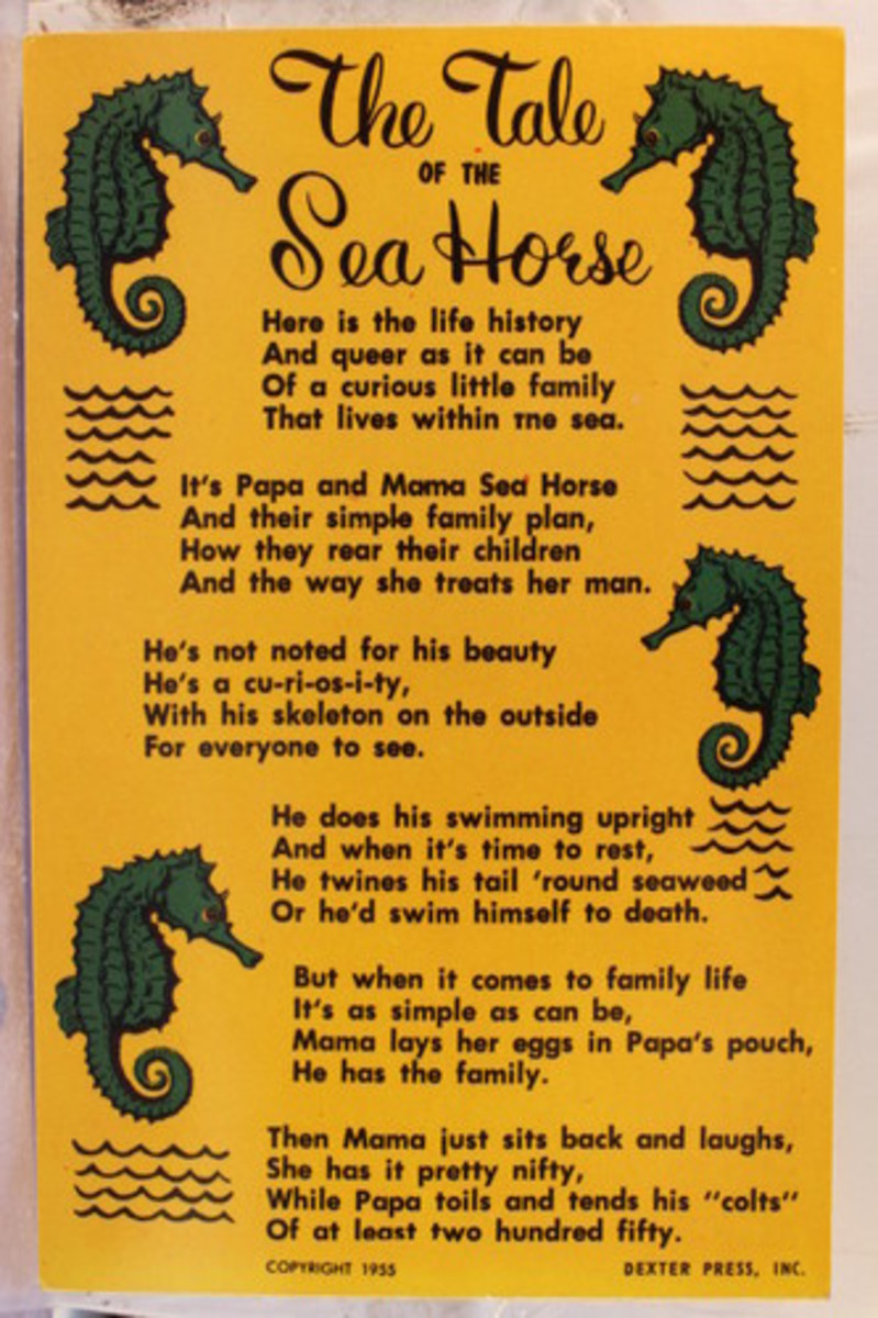 poster in yellow and black - The Tale of the Sea Horse