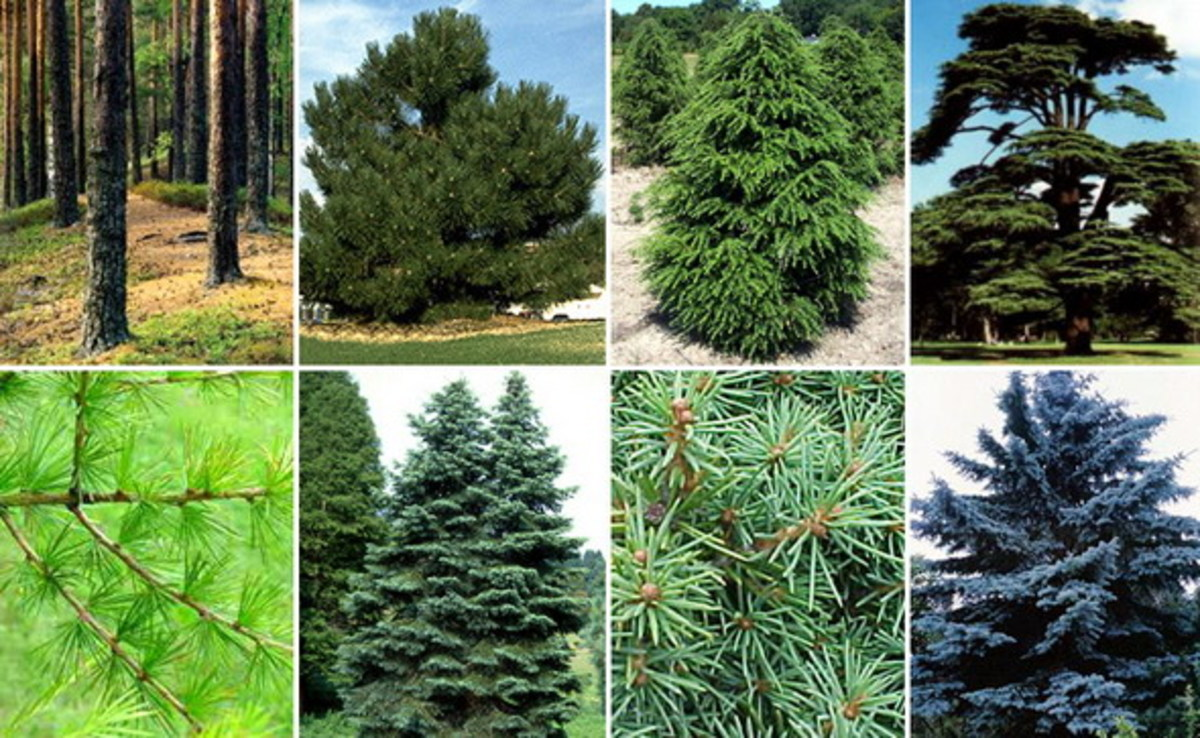 Anastasia's Ringing Cedars - The Unbelievable Truth