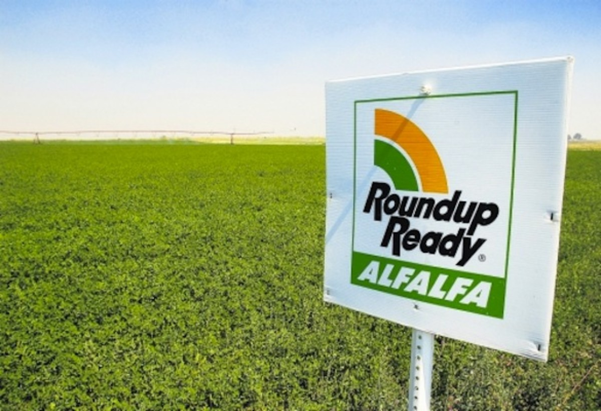 They will label fields who are growing GMO crops, why not the actual food in the market?