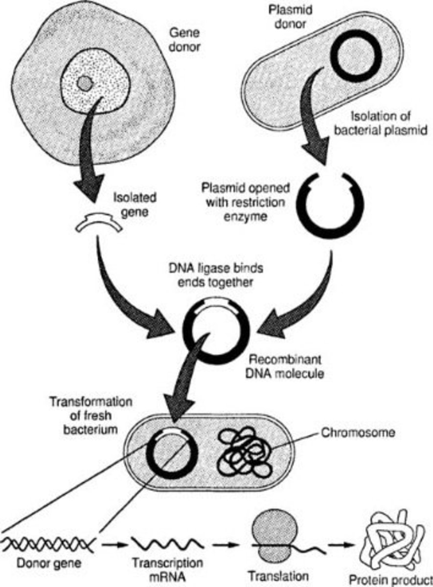 Steps in Recombinant DNA technology