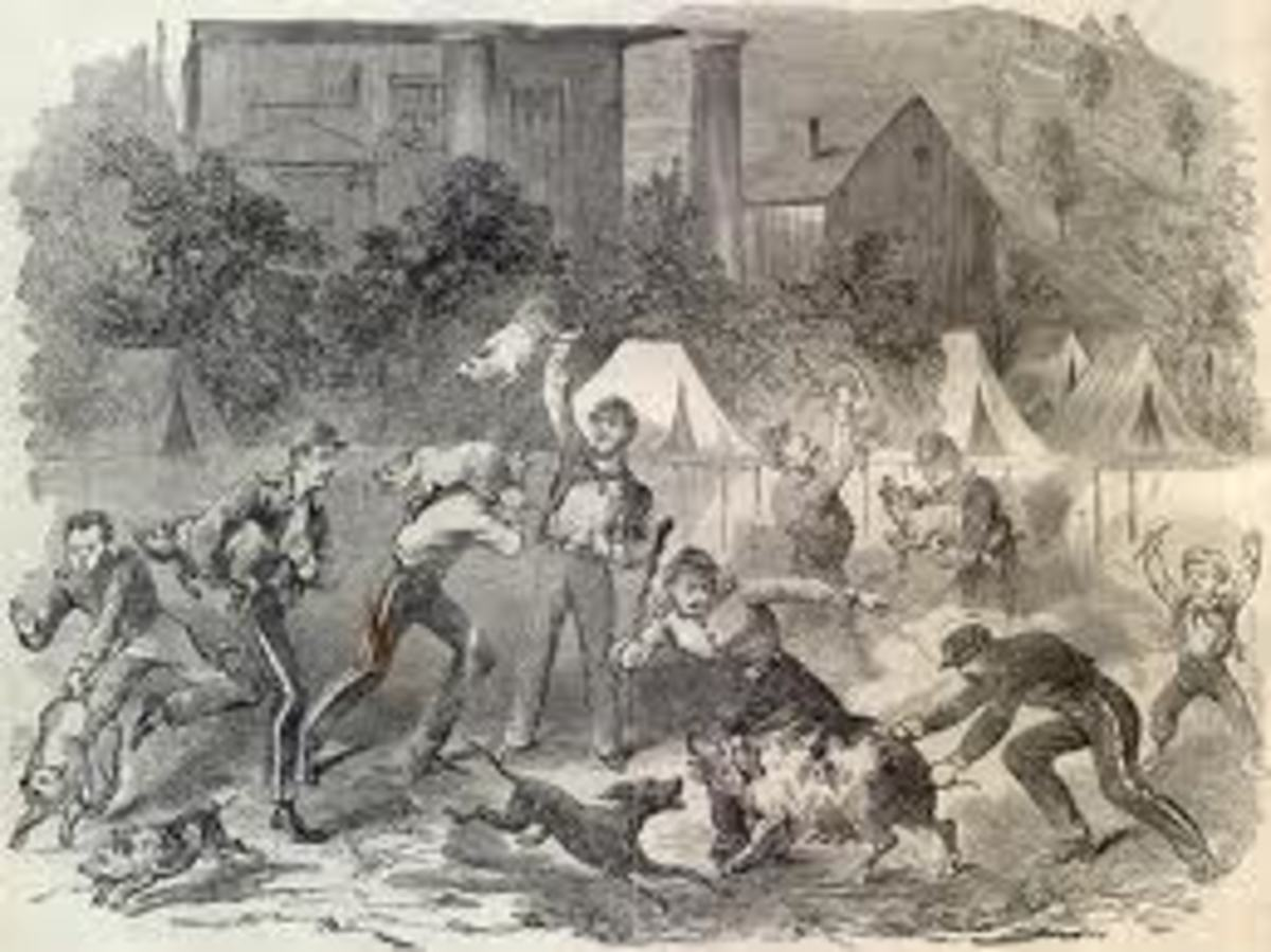 Sketch - troops chase after farm animals