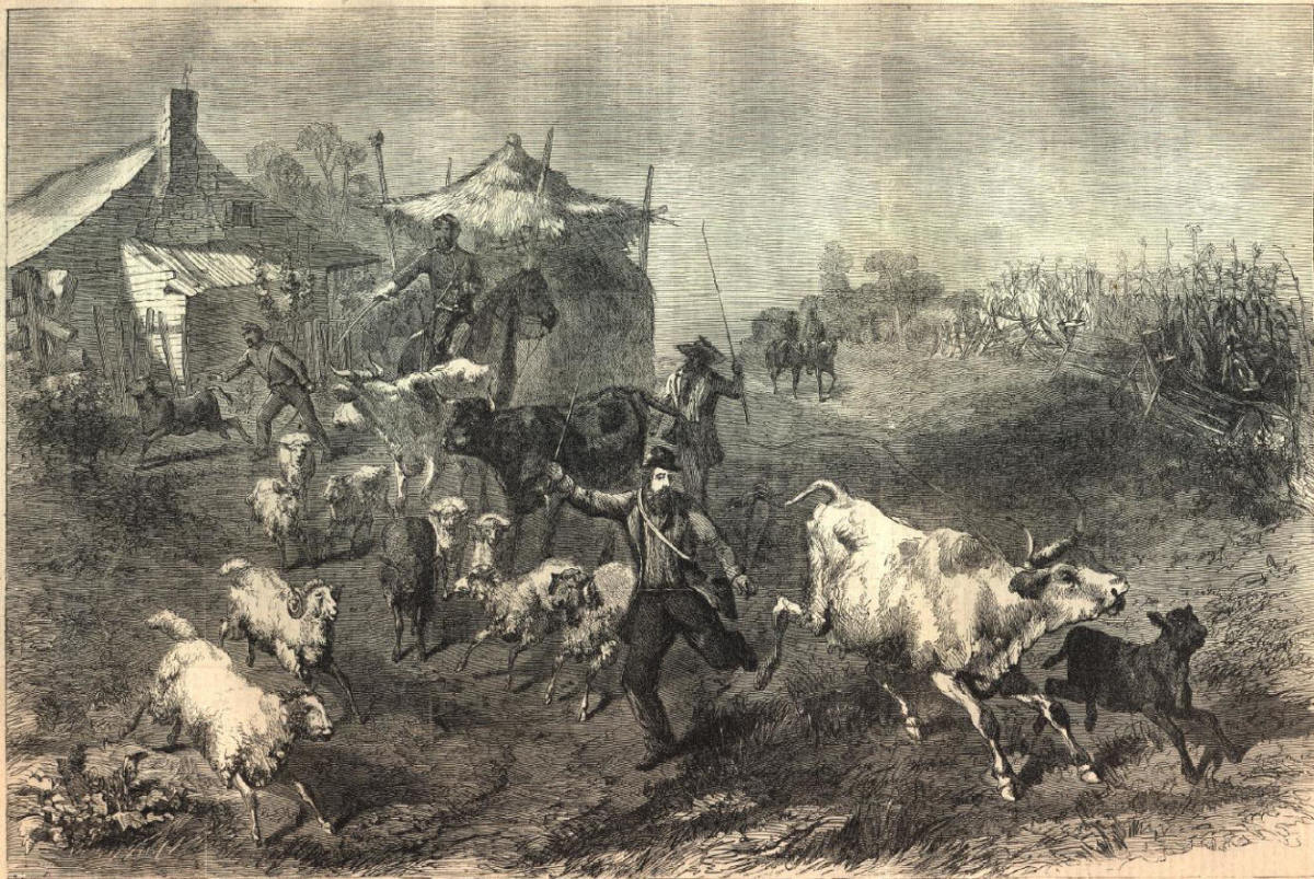 Sketch - troops forage through a farmyard
