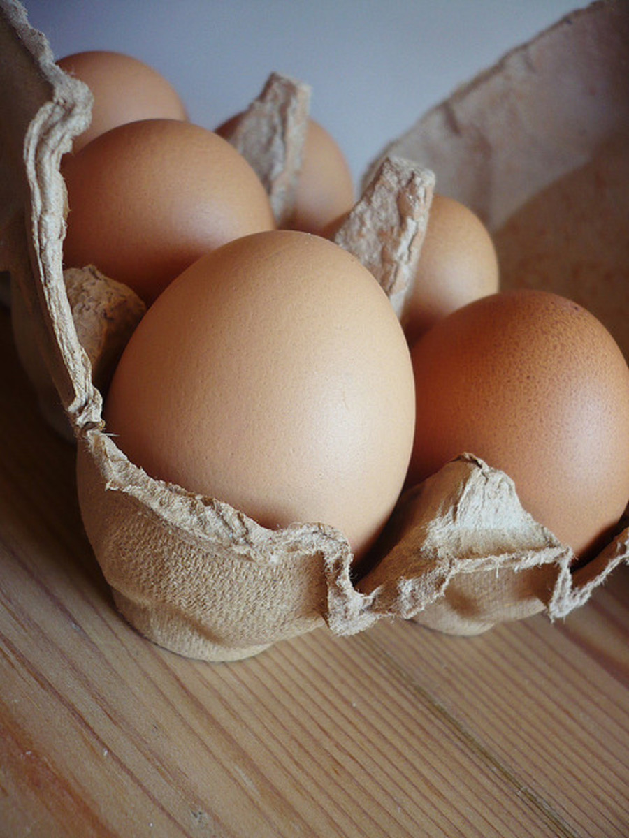 Most all life on earth comes from an egg (or a seed, which is the same concept).