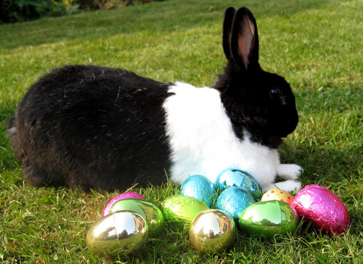 The Easter bunny lays eggs which can be found by children.