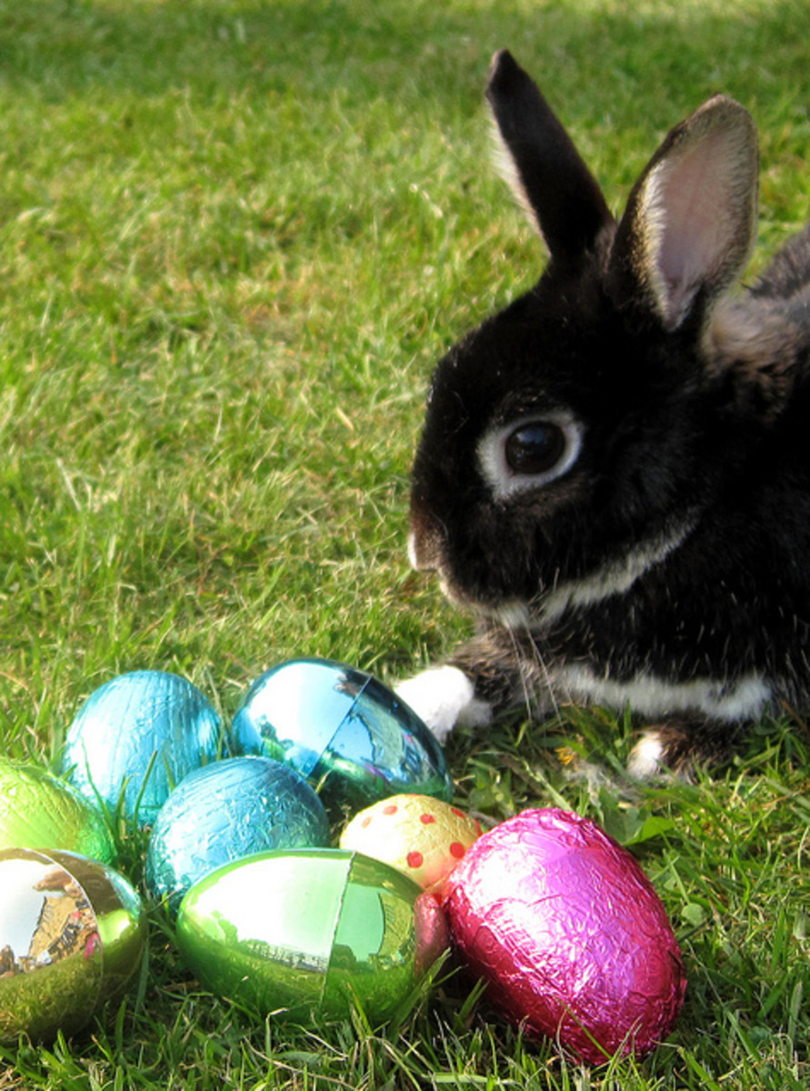 Easter bunnies are adorable, but they shouldn't be given as pets!