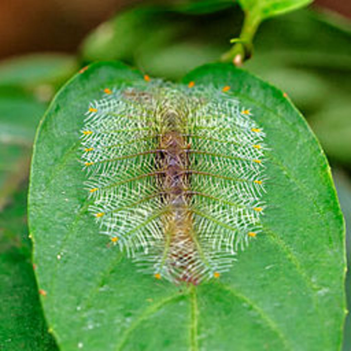 best-way-to-find-caterpillars