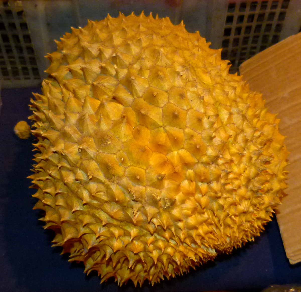 A ripe durian fruit