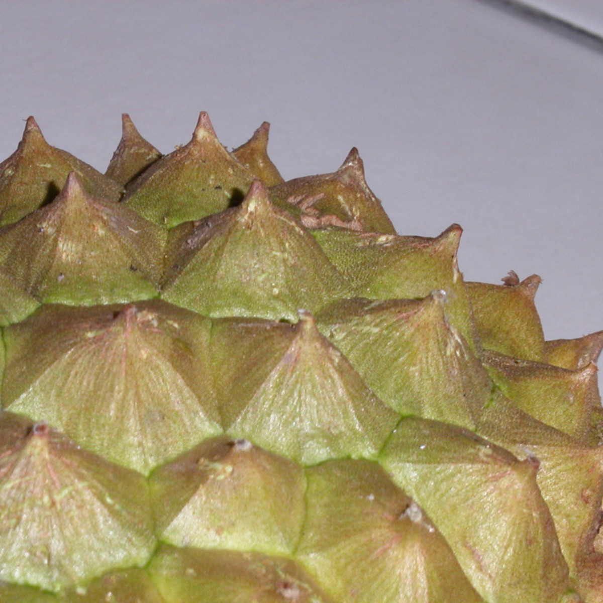 The thorny durian husk