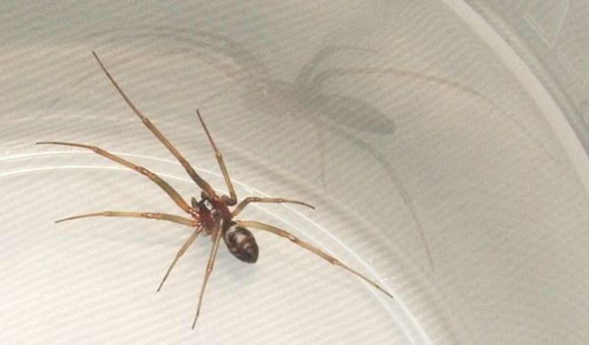 how-to-catch-a-spider-without-getting-bitten