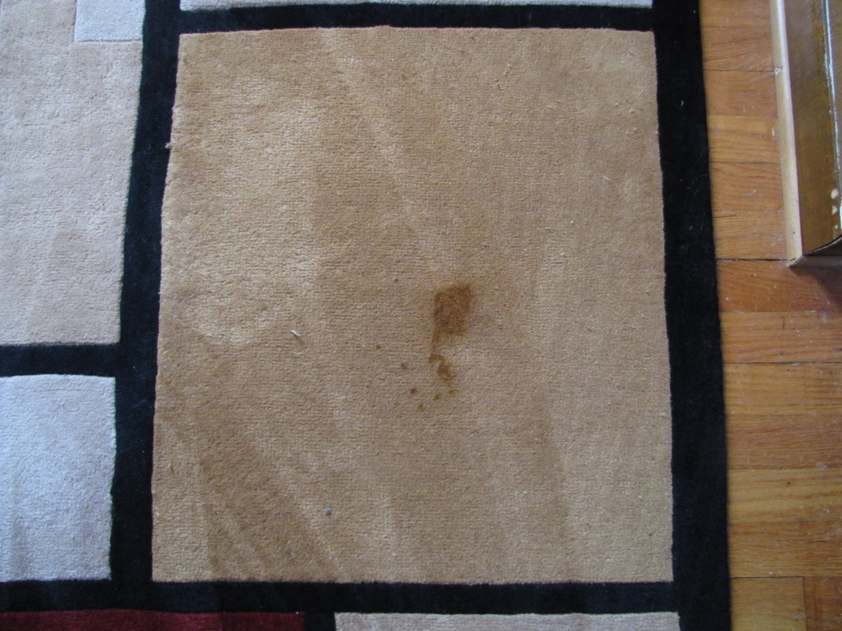 Cat vomit stain on wool rug