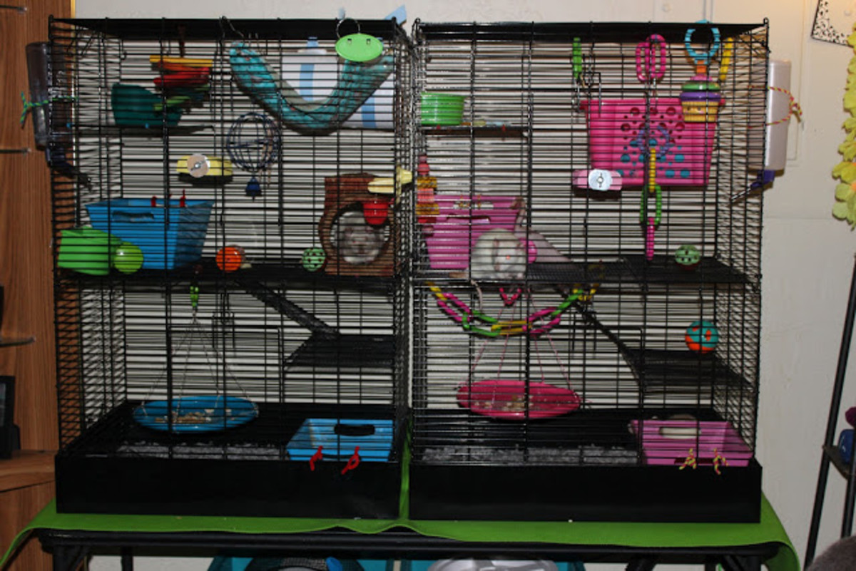 Here is a great setup of the rat manor cage. There is an appropriate amount of homes, toys, and loft hideouts.