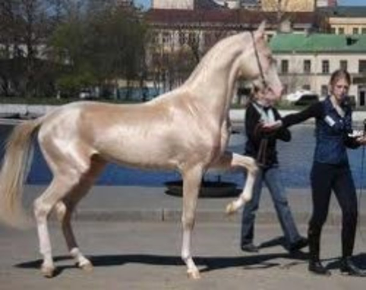 Worlds Most Beautiful Horse Breeds From Around The World Hubpages