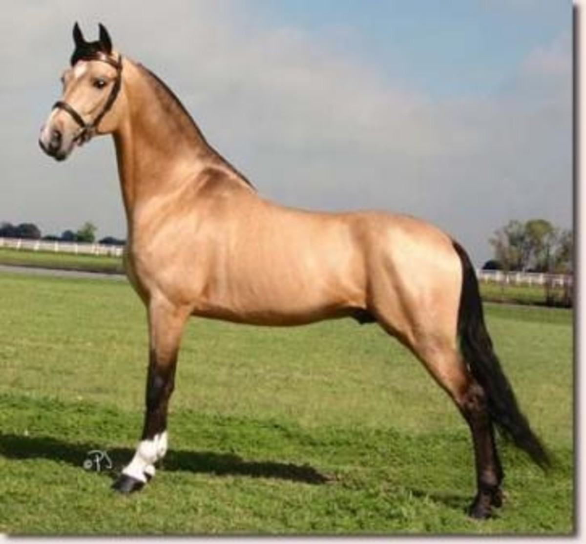 top-30-most-beautiful-horse-breeds