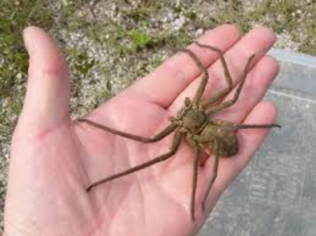cape-verde-poisonous-spiders-snakes-insects-bugs-and-dangers-on-the-islands-and-in-the-water