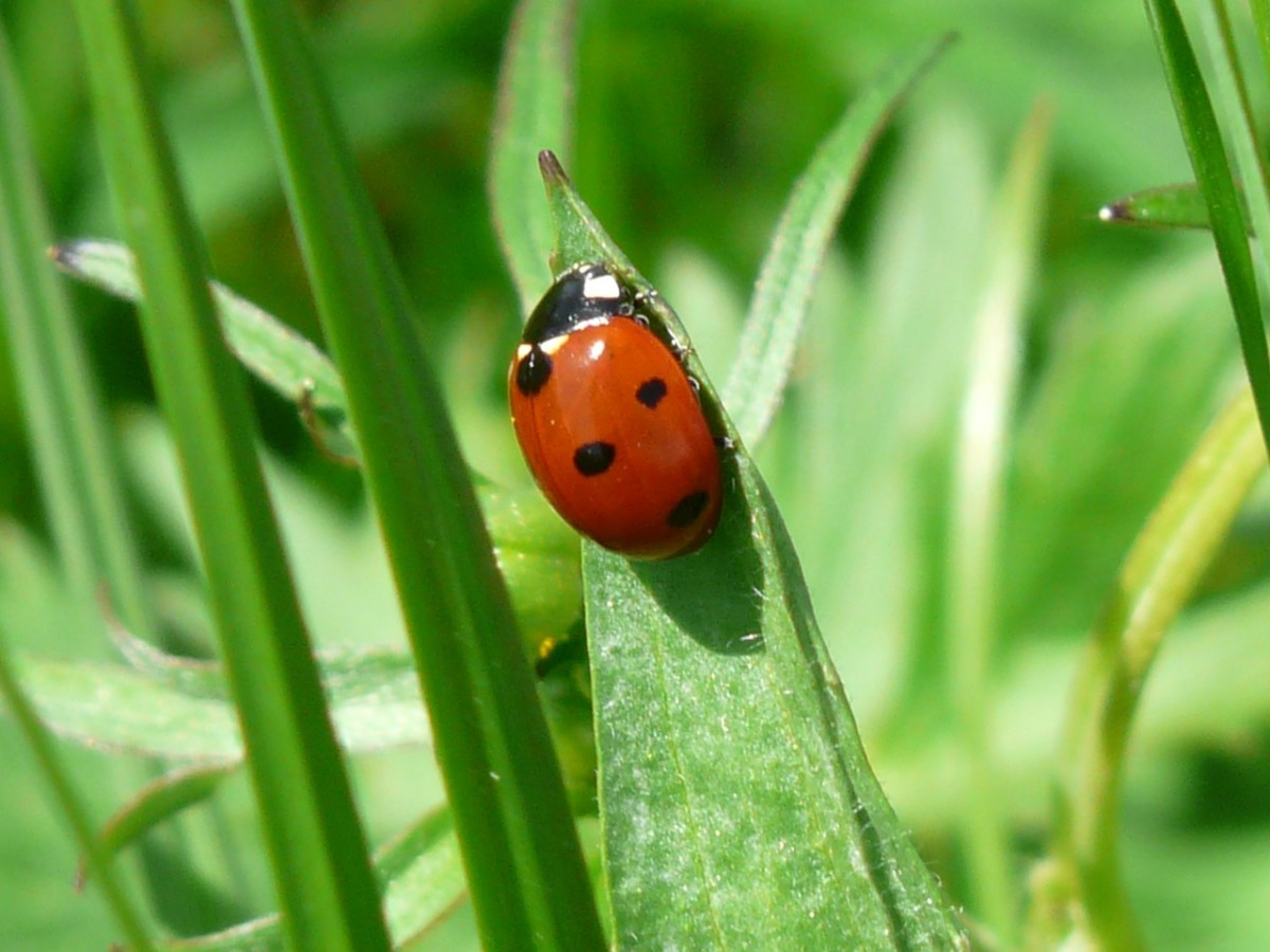 Ladybugs are one of my favorite good luck symbols.