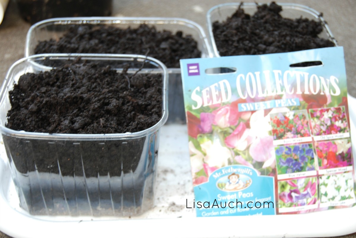 recycle food containers to use to plant seeds