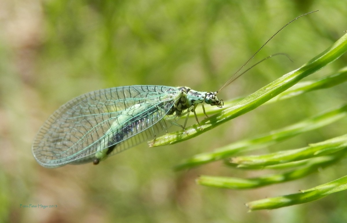 not-all-insects-in-the-garden-are-bad