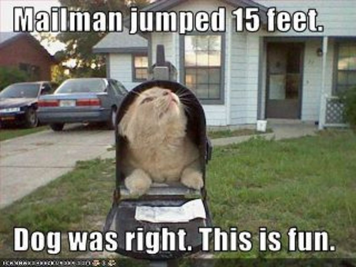 whats-in-your-mailbox-mailbox-infestations-and-more-part-two-warm-and-fuzzies
