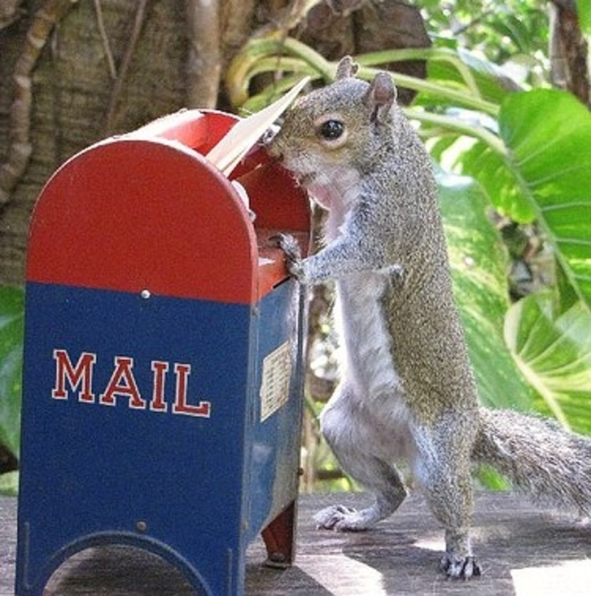 An irate squirrel lodges a complaint with the Postmaster about letter carriers who keep sticking their hands into his nut stash.  I know that sounds completely inappropriate but there I said it.