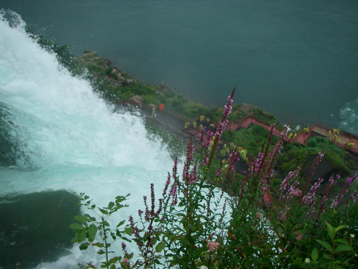 Left branch of the American Falls with wildflowers in the immediate foreground.