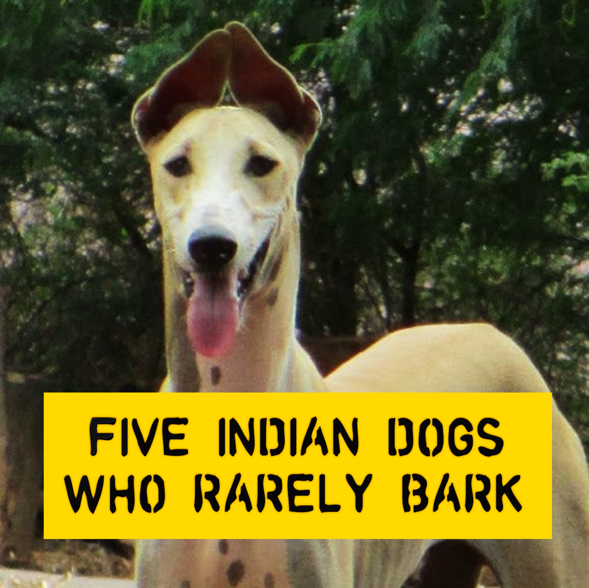 Five Indian Dogs Who Rarely Bark