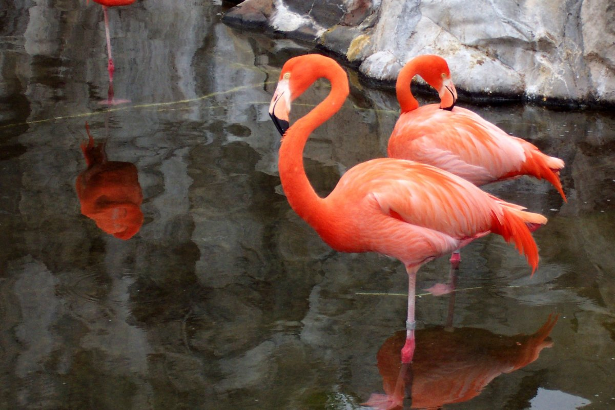Two flamingos in a pool.
