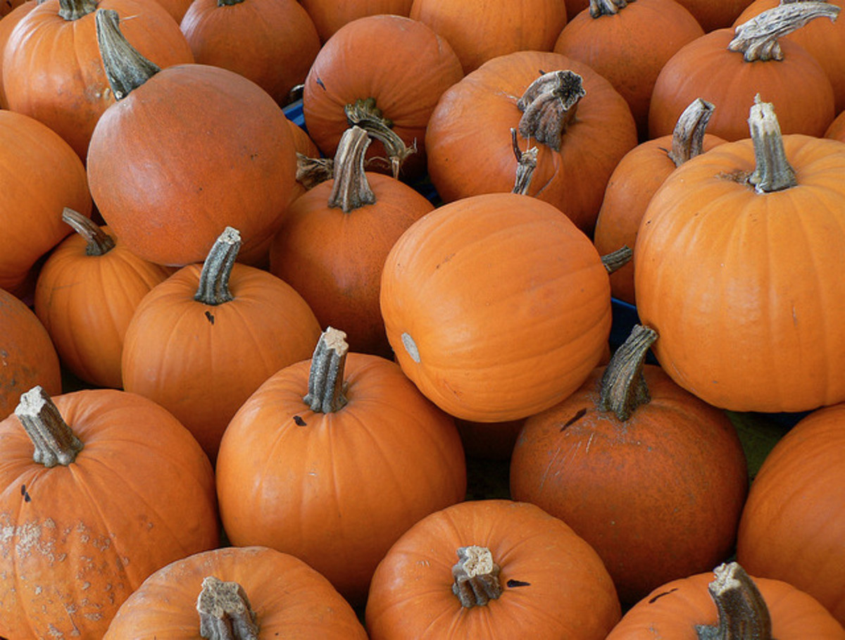Why is Pumpkin Spice so popular?