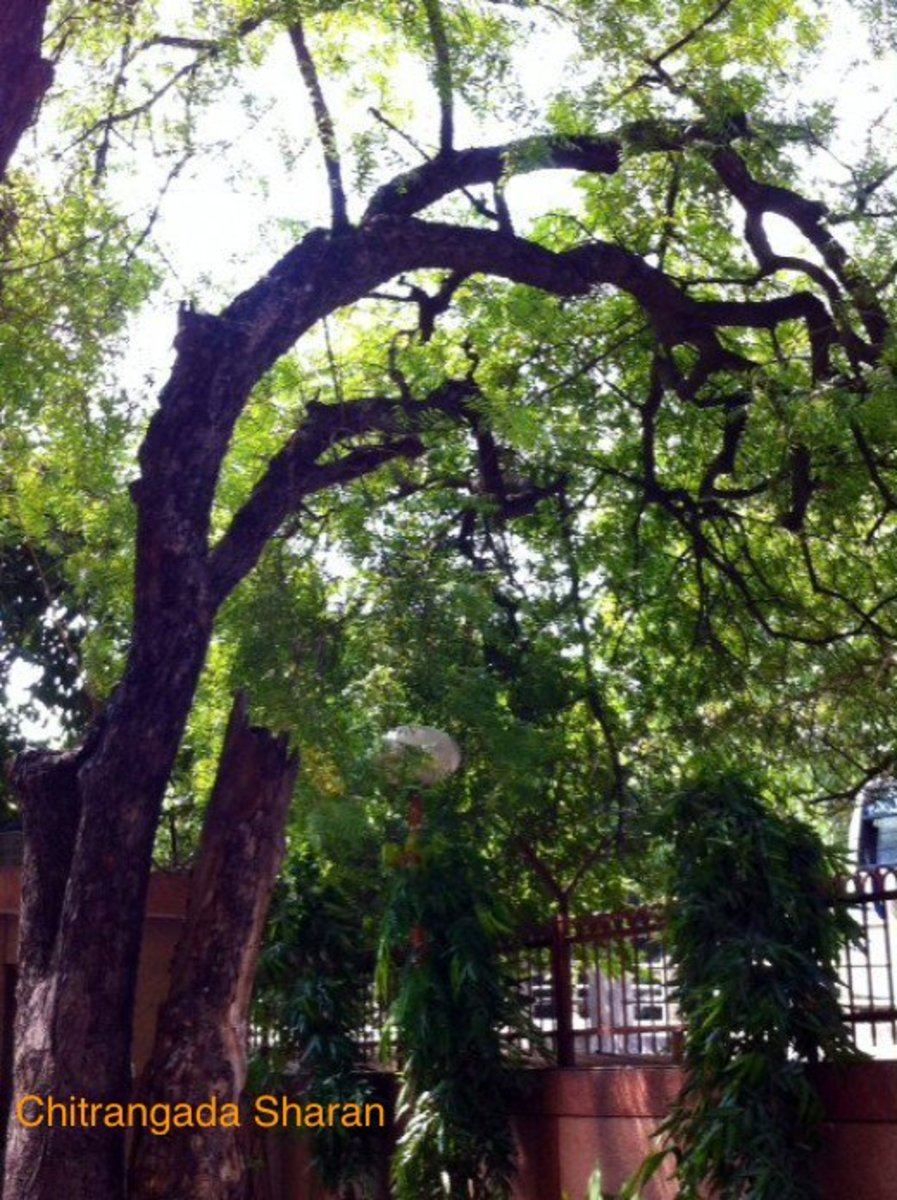Gifts of Nature--Our Trees !