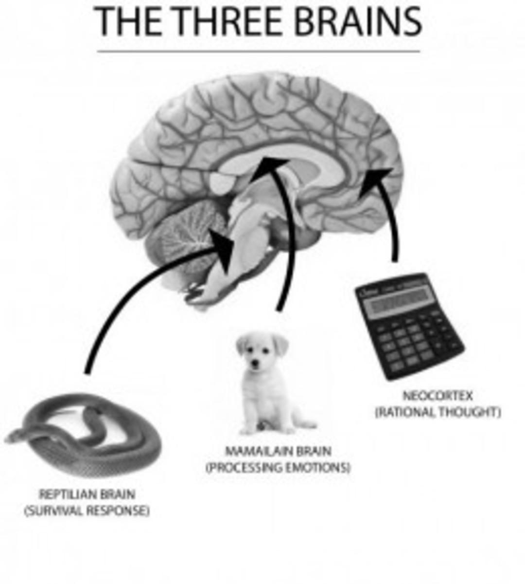 Enneagram QuadCubes and  QuadArrows:  Four Core Relationships