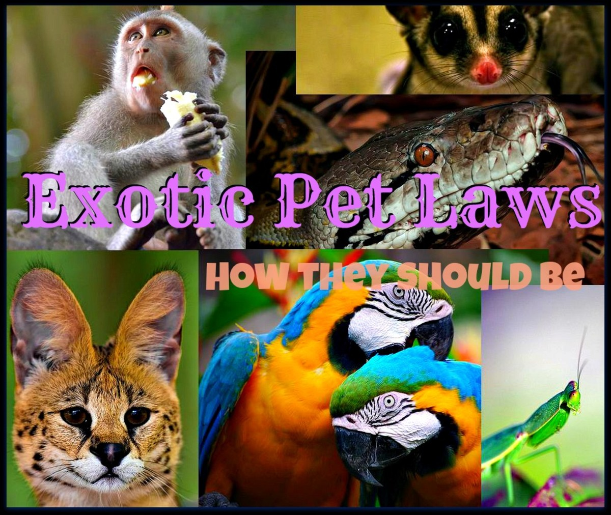 This is What Exotic Pet Laws Should Be Like