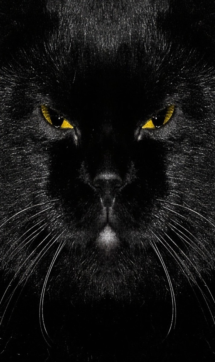 Black Cat Head in the Dark