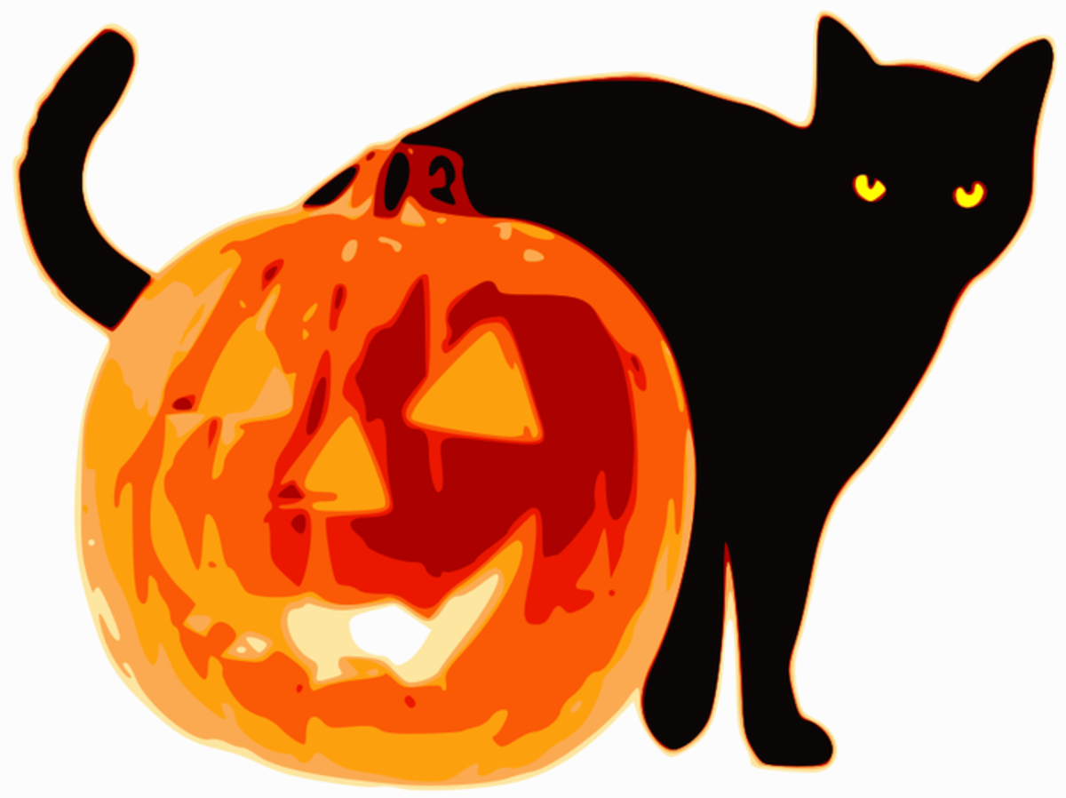 Black Cat with Halloween Pumpkin
