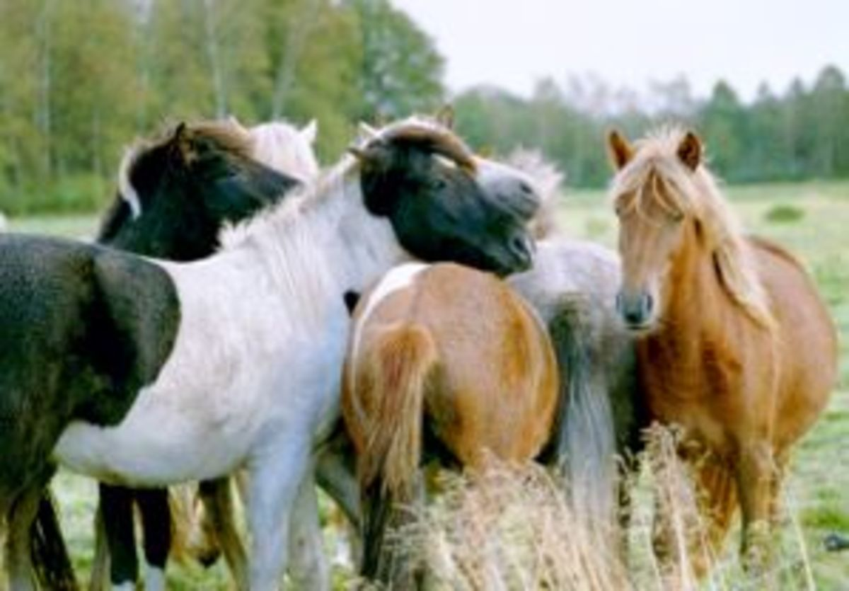 Sense of touch is very important for horses ability to socialize and communicate with other horses in the herd,