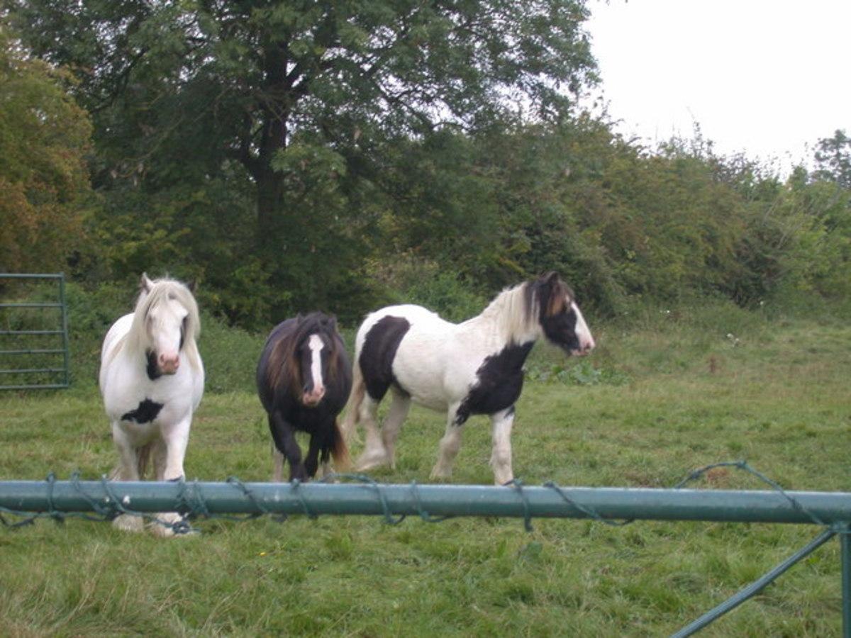 Horses can sense pressure, pain, vibration, heat, and cold.
